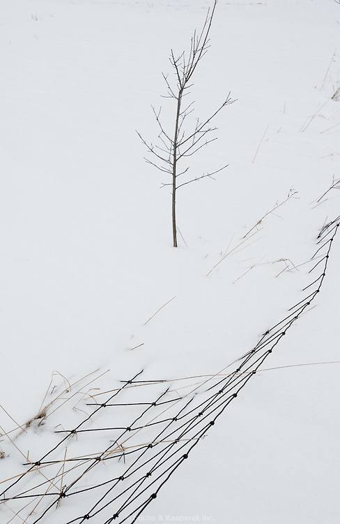A wire fence and tree create a pattern against the snow.