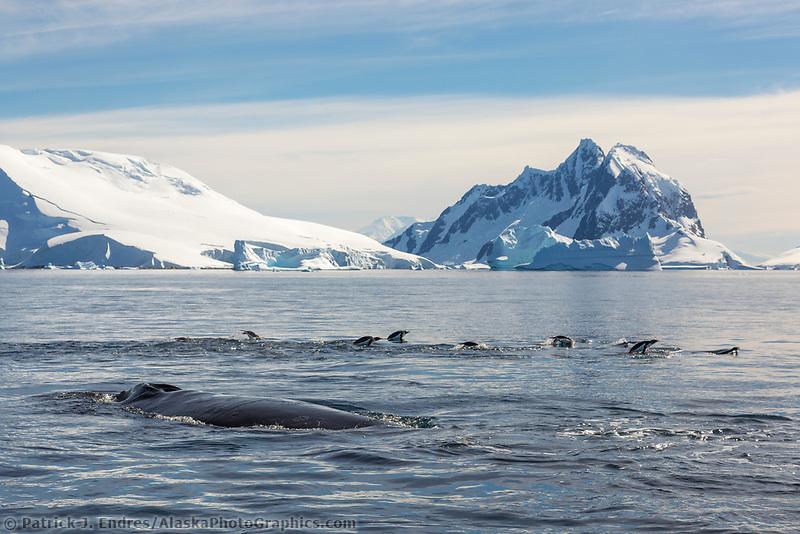 Peterman Island, Antarctic Peninsula.