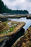 Beautiful landscape with marine flora and tide pools at Botanical Beach Juan de Fuca Provincial Park shoreline scenery, Port Renfrew, Vancouver island, British Columbia, Canada 2017 Image © MaximImages, License at https://www.maximimages.com