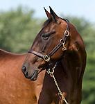 Armbro Feather, famous Standardbred mare at Winbak Farm