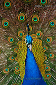 Carl, ANIMALS, wildlife, photos(SWLA3759,#A#)