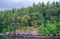 WASJ_D175 - USA, Washington, San Juan Islands, Shaw Island, Forest of Douglas fir and Pacific madrone above rocky shoreline.
