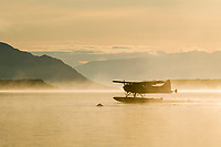 Float plane lands on Naknek lake while a brown bear swims in the waters looking for fish, Katmai National Park, southwest, Alaska.