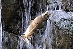 salmon sculpture & waterfall, Portland Zoo