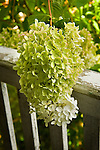Hydrangea Cottage Porch, Eagles Mere, Pennsylvania, 49 Mineral Springs.
