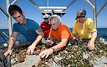 Jack (C) and Anne (R) Rudloe go out onto the Gulf of Mexico to collect specimens for their Gulf Specimen Marine Lab in Panacea, Florida Florida May 27, 2009.  (Mark Wallheiser/TallahasseeStock.com)