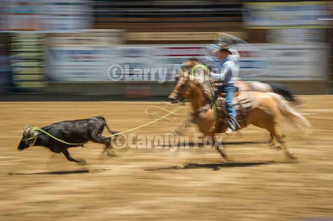 75th Amador County Fair, Plymouth, Calif.<br /> <br /> Clayton Bigelow and Clayton Brown, team roping on Day 3