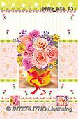 Marek, FLOWERS, BLUMEN, FLORES, photos+++++,PLMPBSA83,#f#, EVERYDAY ,roses