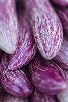 Italie, Vénétie, Venise:  Aubergines sur la Giudecca  // Italy, Veneto, Venice: Eggplant on the Giudecca