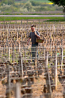 pinot noir replanting in spring clos st louis fixin cote de nuits burgundy france