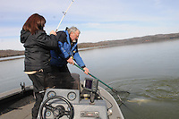 NWA Democrat-Gazette/FLIP PUTTHOFF <br /> Denise Rivers catches a Beaver Lake striped bass while her husband, Kevin Rivers, nets the fish. The husband and wife fishing guides caught stripers during a trip Jan. 16, 2016 in the Rocky Branch area.