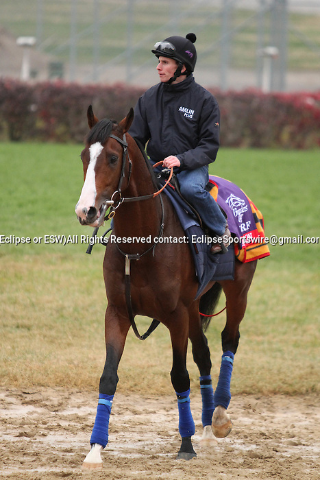 Sea Moon, trained by Sir Michael Stoute and to be ridden by Olivier Peslier , exercises in preparation for the 2011 Breeders' Cup at Churchill Downs on  November 4, 2011.