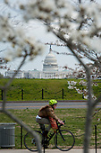 With the US Capitol in the distance, people pass by the Washington Monument as the cherry blossoms bloom and the United States deals with the COVID-19 pandemic in Washington, DC, Tuesday, March 17, 2020. Credit: Rod Lamkey / CNP