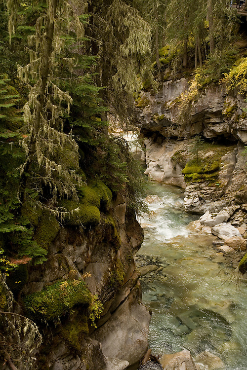 Rain forest overhangs Johnstone Canyon in Banff NP