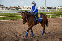 HALLANDALE BEACH, FL - JANUARY 26: West Coast and Dana Barnes prepare for Pegasus World Cup Invitational at Gulfstream Park Race Track on January 26, 2018 in Hallandale Beach, Florida. (Photo by Alex Evers/Eclipse Sportswire/Getty Images)