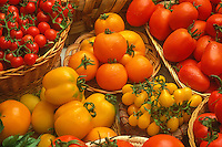 Harvest baskets of ripe yellow tomatoes: Mountain Gold, Yellow Pear, Yellow Stuffer, with Roma and red cherry