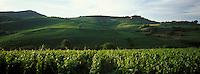 Europe/France/Rhône-Alpes/69/Rhône/Env de Pouilly-le-Monial : Le vignoble AOC Beaujolais