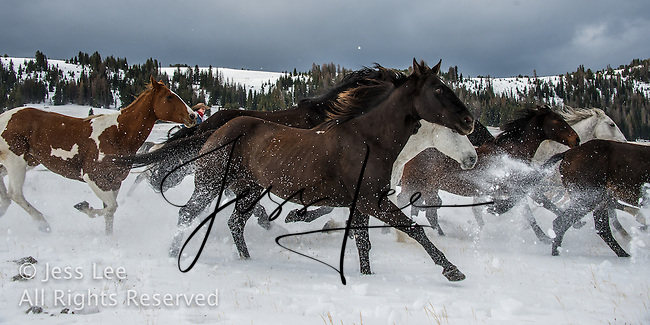 Cowboys and cowgirls living the western lifestyle. Cowboys in winter photography