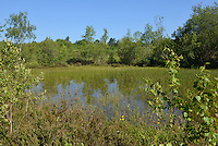 Classic heathland pool, perfect for breeding dragonflies, Decoy Heath, Hampshire