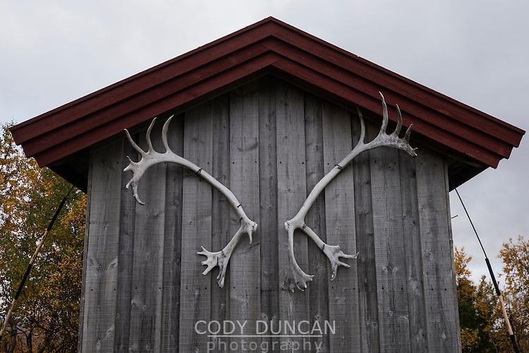 Reindeer antlers on shed at Syter hut, Kungsleden trail, Lapland, Sweden