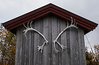 Reindeer antlers on shed at Syter hut, Kungsleden trail, Lapland, Sweden