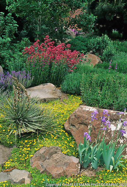 In the southwest andn Rocky Mountain areas, water wise landscape designs come in all colors and shapes and incorporate a wide range of both nativespecies as well as appropriate adapted plants, ranging from succulents and cacti to endemic penstemons and traditional perennials. Mary Ellen Keskimaki created s colorful patchwork of thyme, soapwort, iris and other perennials on her hillside front yard garden in Golden, Colorado.l
