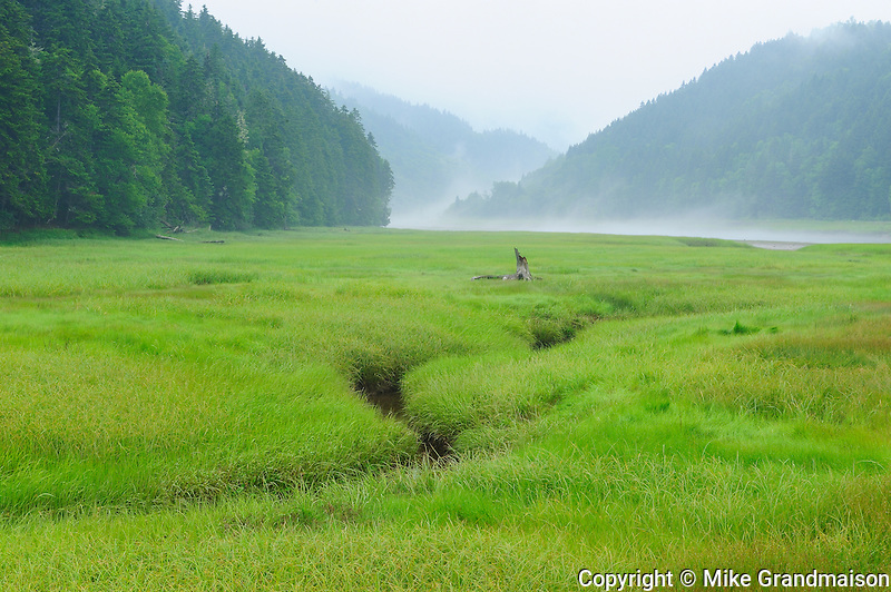 Marsh in fog<br /> Fundy National Park<br /> New Brunswick<br /> Canada