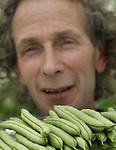 Foto: VidiPhoto<br /> <br /> IJSSELMUIDEN - Peter Hollander runt samen met zijn vrouw Paula al veertig jaar het tuinbouwbedrijf &ldquo;De Echte Hollander&rdquo; in de Koekoekspolder bij IJsselmuiden. Waar in de beginjaren een breed scala aan groenten werd geteeld, is het bedrijf nu gespecialiseerd in de teelt van de lange, zachte raapsteel Namenia en de exclusieve kasboon Florine. Deze robuuste, vlezige sperzieboon werd eigenlijk ontwikkeld voor de Spaanse markt, maar sloeg daar niet aan. Daarom trok de zaadfirma het ras terug. Hollander onderkende echter de bijzondere kwaliteiten van dit ras en zorgt nu zelf voor de vermeerdering. Daarmee is hij in Nederland de enige teler van deze bijzondere kasboon. De lastig te oogsten bonen -&quot;je moet oog voor de rijpheid hebben&quot;- worden geteeld op substraat onder 10.000 vierkante meter glas. De productie wordt op een dusdanig niveau gehouden dat de kwaliteit optimaal is en de exclusieve markt niet wordt overspoeld. De sperziebonen worden door groothandel Postuma geleverd aan speciaalzaken in heel Nederland, wiens klanten de goed houdbare en smakelijke kasbonen op waarde schatten.