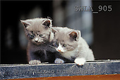 Carl, ANIMALS, photos(SWLA905,#A#) Katzen, gatos