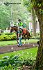 Dancing Afleet before The Delaware Oaks (gr 2) at Delaware Park on 7/13/13