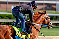LOUISVILLE, KENTUCKY - MAY 01: Hence, owned by Calumet Farm and trained by Steve Asmussen, exercises in preparation for the Kentucky Derby at Churchill Downs on May 1, 2017 in Louisville, Kentucky. (Photo by Jesse Caris/Eclipse Sportswire/Getty Images)