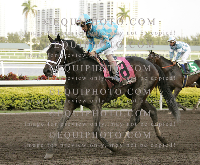 Scat Daddy with John Velazquez riding after winning the Fountain Of Youth Stakes at Gulfstream Park. Photo By Gary I. Rothstein/EQUI-PHOTO.