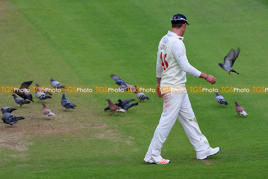 Chris Cooke of Glamorgan keeps an eye on the pigeons during Glamorgan CCC vs Essex CCC, Specsavers County Championship Division 2 Cricket at the SSE SWALEC Stadium on 23rd May 2016