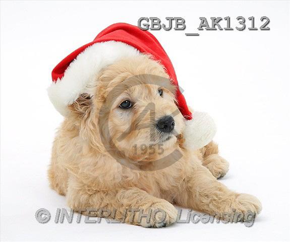 Kim, CHRISTMAS ANIMALS, photos(GBJBAK1312,#XA#) stickers