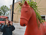 """Ginny Christensen of Saugerties, viewing, """"Grey Gardens"""" by Erica Devries and Matt Dilling, one of the 35 Artist painted Rocking Horses on display around Saugerties, NY as part of the Chamber of Commerce sponsored Art in the Village Project titled """"Rocki' Around Saugerties."""" This photo taken on Friday, May 26, 2017. Photo by Jim Peppler. Copyright/Jim Peppler-2017."""