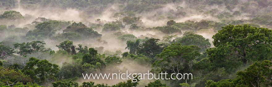 Morning mist over lowland Amazon Rainforest. Cristalino State Park, Brazil.