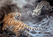 Kayomi, REALISTIC ANIMALS, paintings, tiger , dragon, DragonAndTiger_M, USKH50,#A# realistische Tiere, realista, illustrations, pinturas