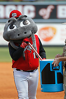 Carolina Mudcats mascot Muddy the Mudcat during a game against the Down East Wood Ducks on April 27, 2017 at Five County Stadium in Zebulon, North Carolina. Carolina defeated Down East 9-7. (Robert Gurganus/Four Seam Images)