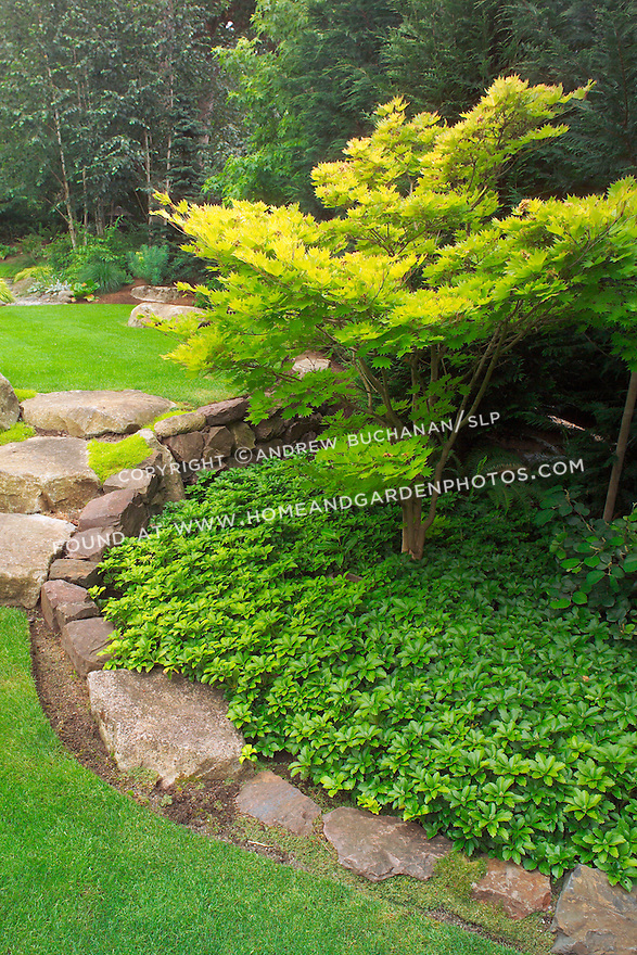 """Even the large stone stairs seem to """"spill"""" from an upper lawn to a lower one, as water would spill between ponds, in this scene from the upper, walking garden in this otherwise small suburban backyard east of Seattle.  Imagine the boulders as pondside buttresses and the groundcover as solid ground in this Zen-like interpretation of a traditional Japanese rock garden. Design by Sander Groves landscapes, Inc."""
