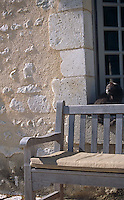 A grey cat sits on a window sill behind a sun-bleached wooden bench in the courtyard