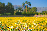 Shallow focus shot of desert wild flower field