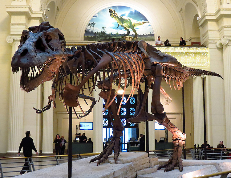 Chicago Scenes: Sue, the largest, most complete, and best preserved Tyrannosaurus rex ever discovered - 42 feet long and 12 feet high at the hip- at the Field Museum of Natural History in Chicago. (DePaul University/Jamie Moncrief)