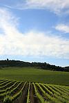 Israel, Upper Galilee, vineyard by road 89