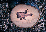 8.17.18 - Leaf Imprinted....