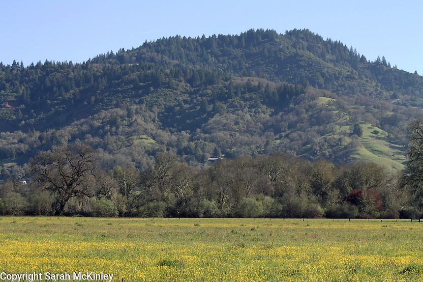 A field of buttercups beneath Red Hill outside of Willits in Mendocino County in Northern California.