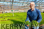 Fit for a President Joe Sugrue from Cools Glasshouses in Ballinskelligs with Shamrock destined for International & the Domestic Market.