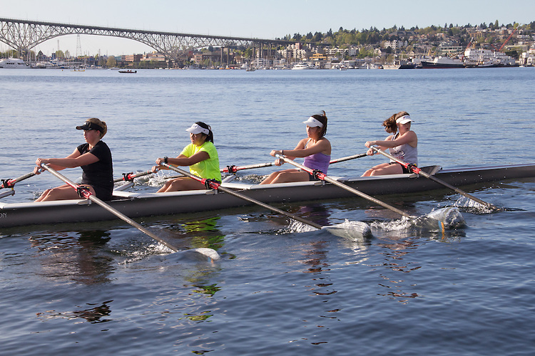 Rowing, Seattle, Seattle Rowing Center, rowing schools, middle school, high school rowers in racing shells, rowers, workout, Lake Union,