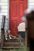 A chained dog in Tacoma, Wash.  (photo Karen Ducey)