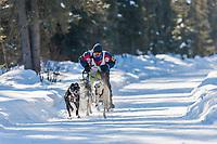 Kim Wells drives a 4 dog team in the 2009 Limited North American sprint sled dog race, Fairbanks, Alaska.
