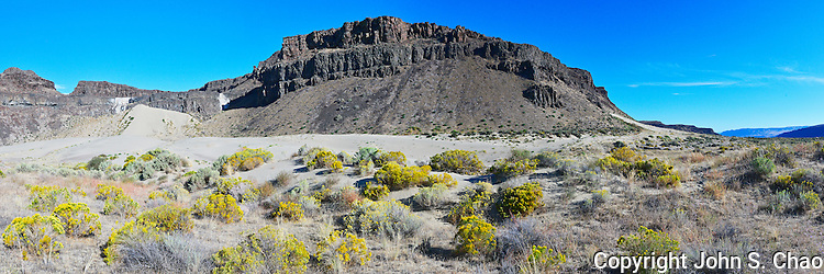 Panorama of flowering Rabbitbrush on sand dunes climbing against ancient volcanic basalt cliffs. Frenchman Coulee, Washington State